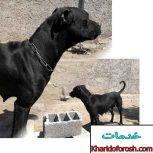 آموزش انواع سگ نگهبان و سگهای خانگی با 30سال تجربه